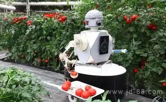 机器人可采摘番茄 目标6秒摘一个